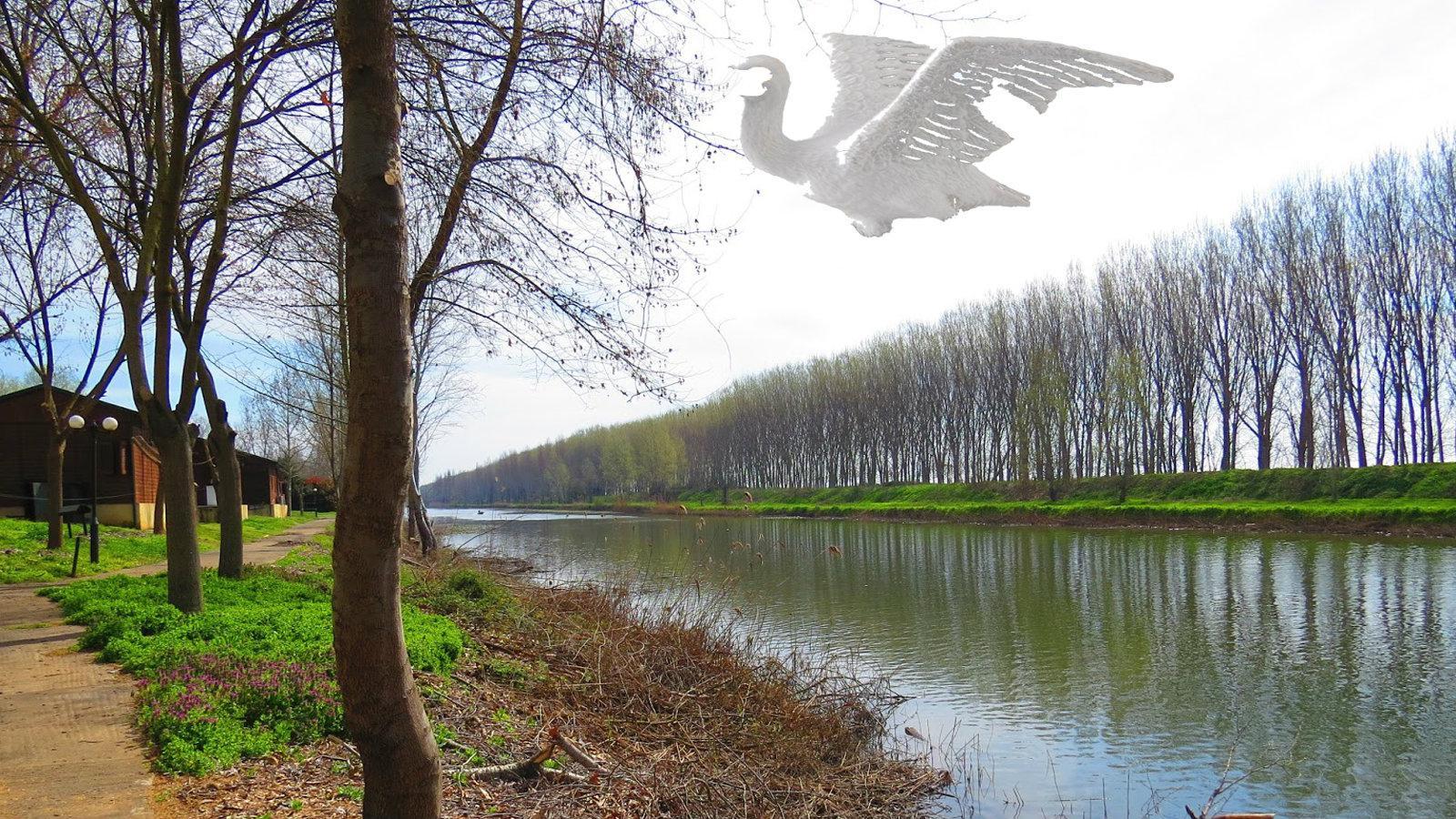 μεγάλο λευκό πουλί κανάλι