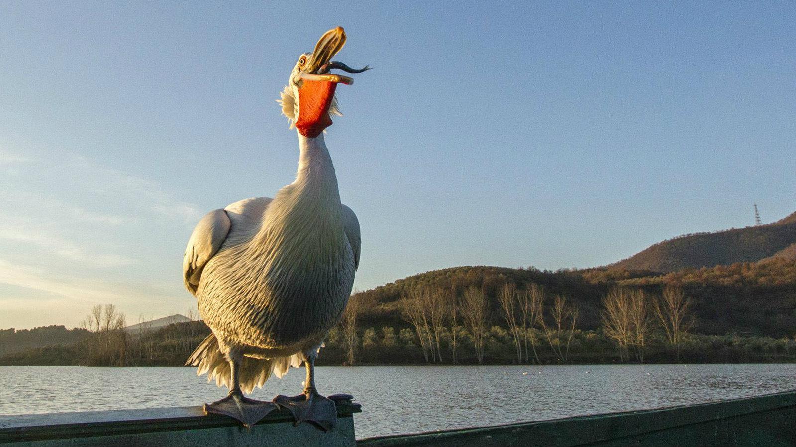 HD τεράστιο πουλί